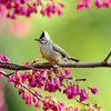 山桜のお花見