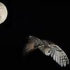 月の使者-3