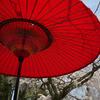 桜と赤い傘