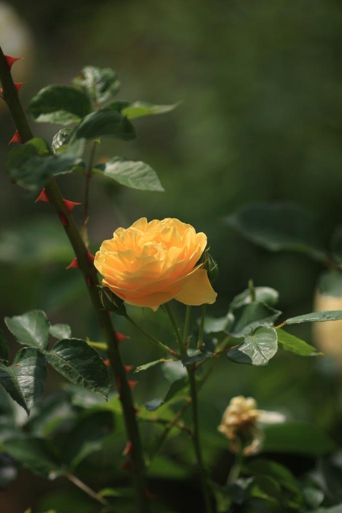 危険!綺麗な花には・・