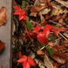 秋の匂い②