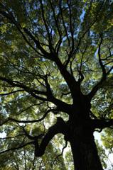 木を見上げて