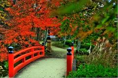 紅葉に架かる橋