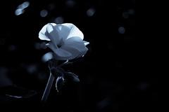 """""""flower in my garden"""""""