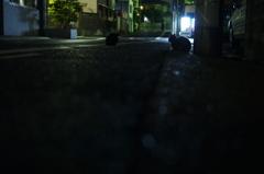 photo545910