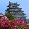 姫路城 with つつじ
