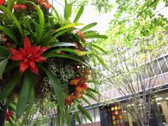 吊り花の風景