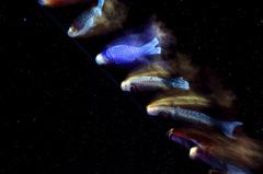 銀河を泳ぐ
