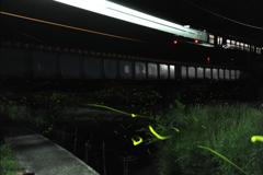 電車とホタル2
