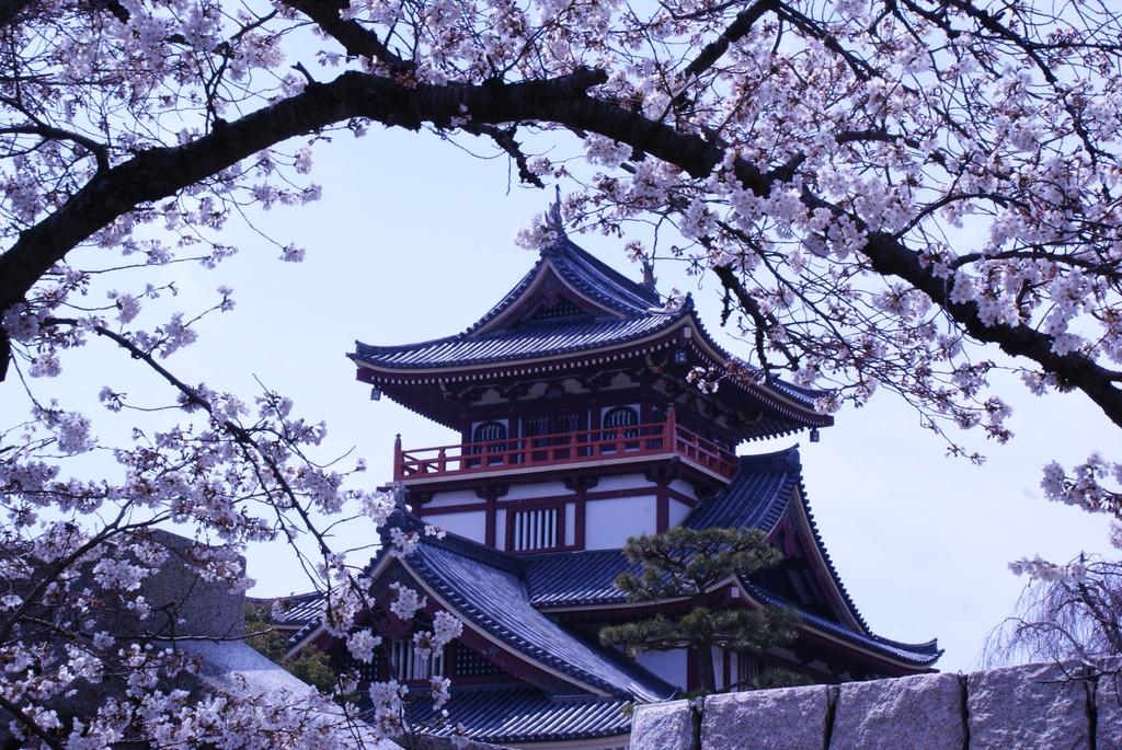 伏見城公園の桜