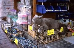 看板猫ちゃん