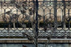 枯れ木に花(雀)