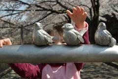 鳥さんいい子