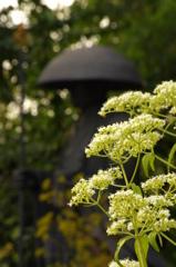 秋の七草 女郎花の寺で 男郎花と錫杖と饅頭笠