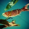 今日の空 泳ぐ鯉