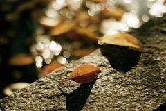 思い出の秋