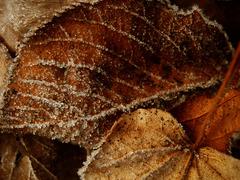 冬・朝・霜