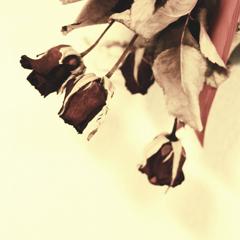 咲いた記憶 IV