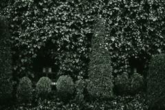 葉の茂る窓