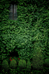 a green wall