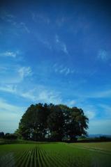 今日の空 2010.06.06