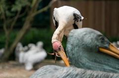 Pelican on Pelican