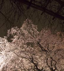 六義園 2010.03.31