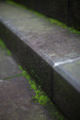 step on decades