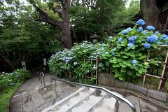 紫陽花 June/2009 #05