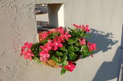 ウチの壁の花