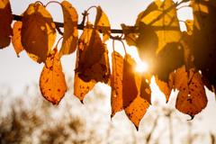 秋の光-0319