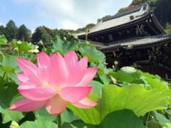三室戸寺2014