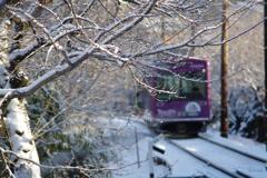 嵐電雪(桜)のトンネル