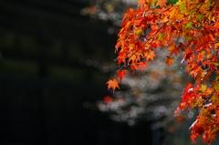 神護寺2015秋