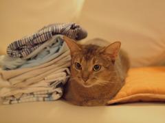 部屋と洗濯物と僕