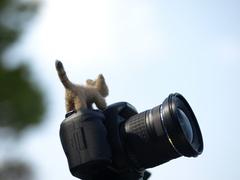 カメラよ、シャッターはこれかい?