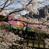 桜の中のアンパンマン