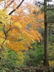 榛名神社(3)