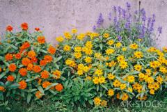 contax T3 / 秋の花壇