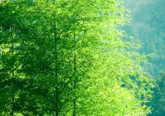 竹林 -とある山村-