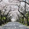 桜並木の道の中で♪