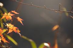秋の午後に射す光