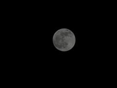 月食前の満月