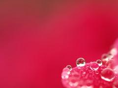 愛の水中花♪