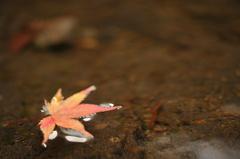一葉だけの秋