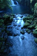 しし神の森