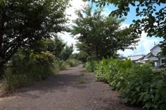 夏草の茂る遊歩道