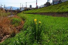 春の小川 散策#6