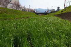 春の小川 散策#5