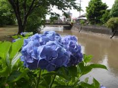梅雨の水無川